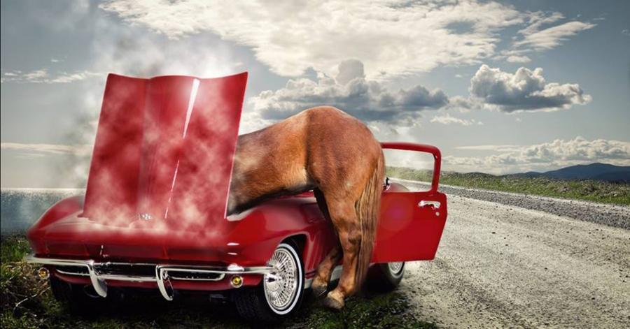 Cavalo com a cabeça no carro