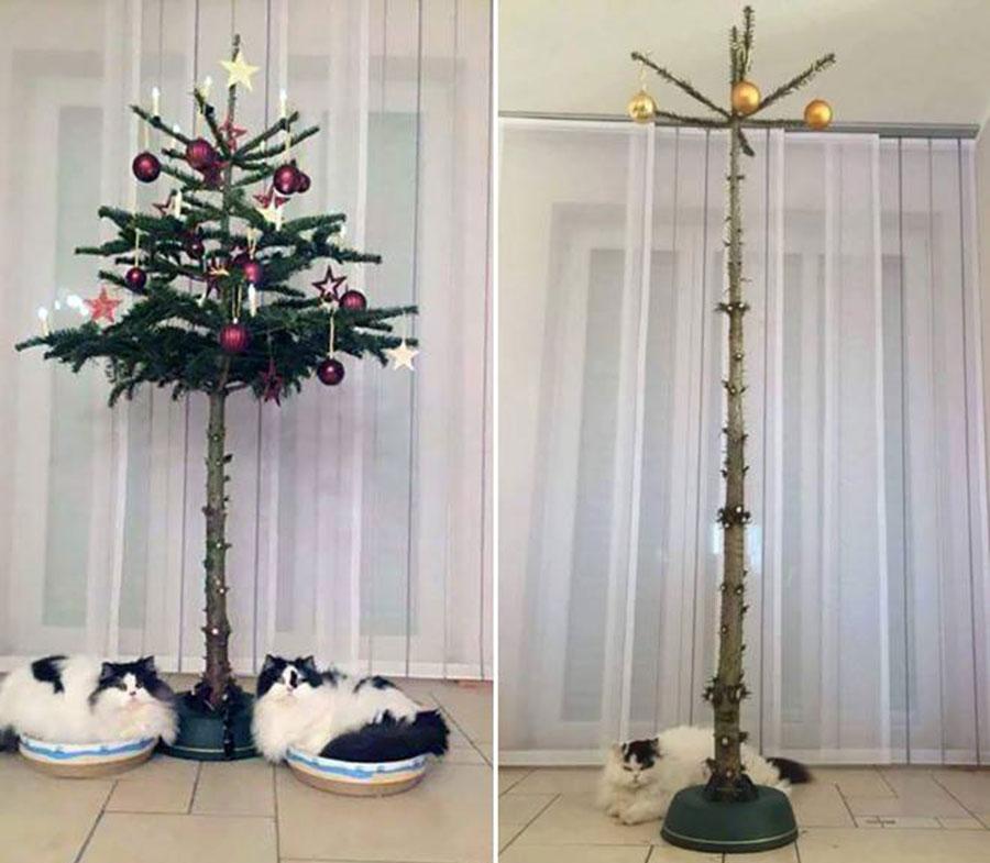 Árvore de Natal Gatos