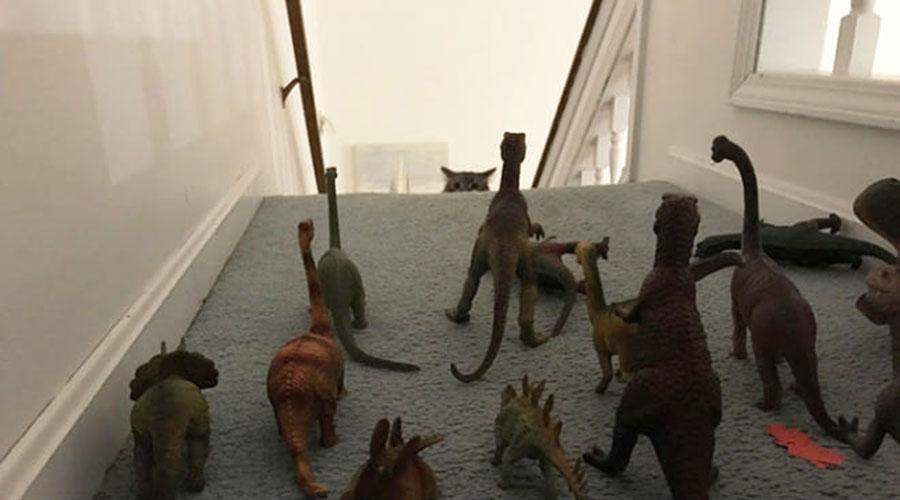 Gato nas escadas