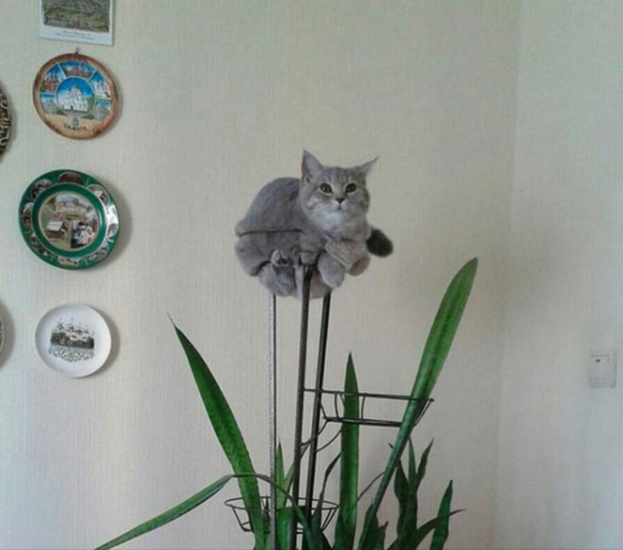 Gato nas Plantas