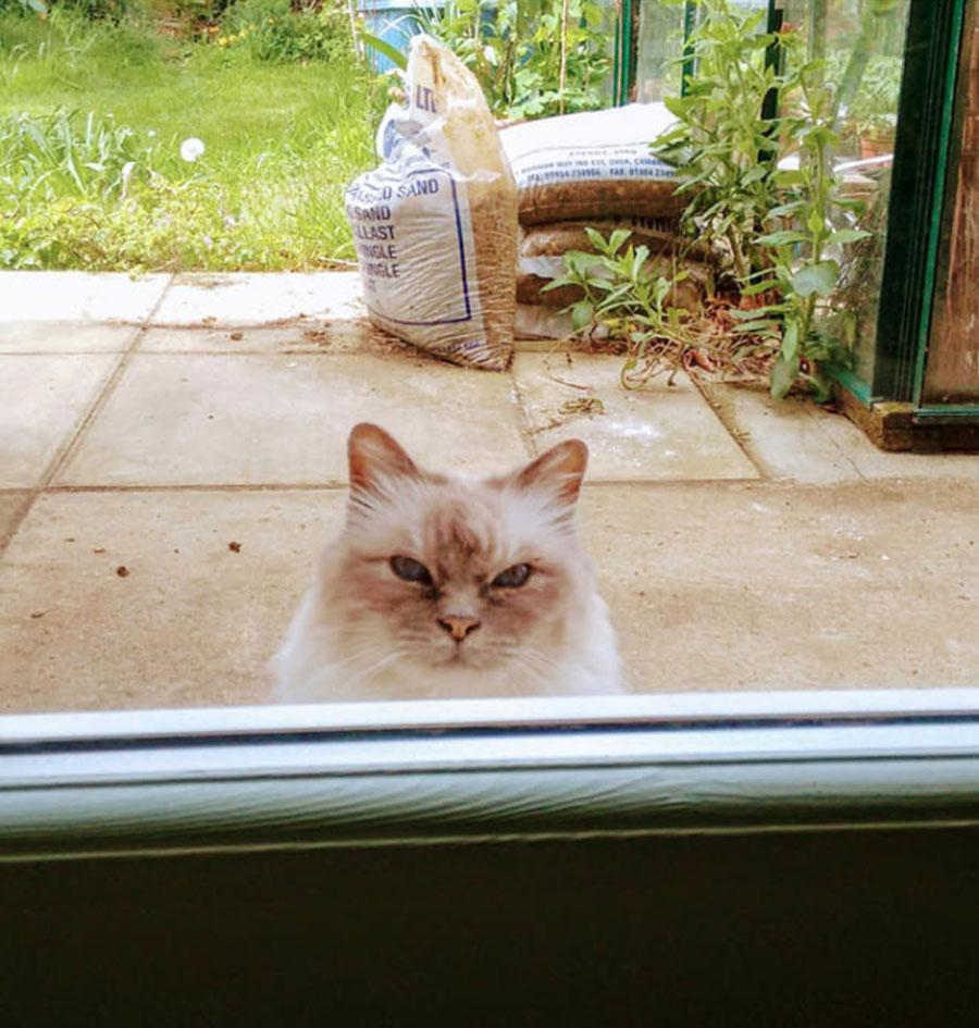 Gato vizinho