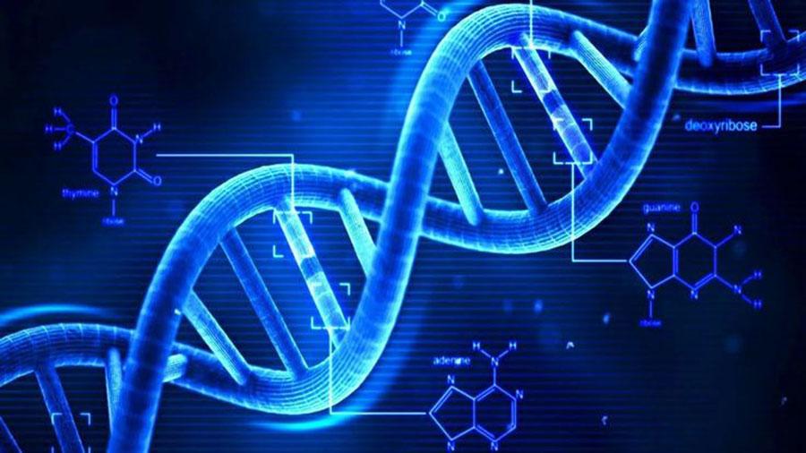 adn mutação genética